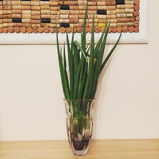 Who *doesn't* store their scallions in a Waterford crystal vase?