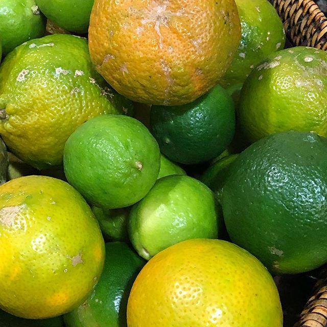 Limones x 3